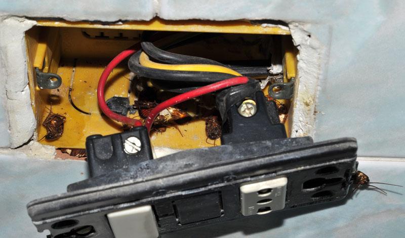 blatte-nelle-prese-elettriche