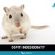 disinfestazione-derattizzazione-topi-e-ratti