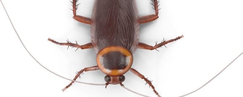 scarafaggi-in-casa